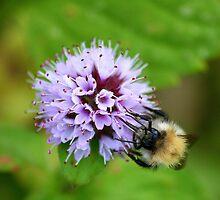 Bee & Flower  by BeckiBee