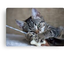 Kitten playing with her toy Canvas Print
