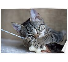 Kitten playing with her toy Poster