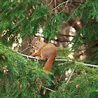 Squirrel Eating His Evening Meal by Nora Caswell