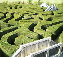 A-Mazed - Longleat, Wiltshire by Samag