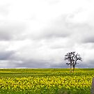 Lone Tree in the Canola by pennyswork