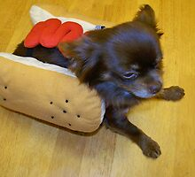 Hot Dog Chihuahua by Nora Caswell