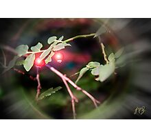Magical Ruby Elf Berries Photographic Print