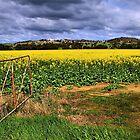Open Field by Stephen Ruane