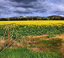 Open Field by Stephen Ruane