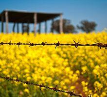 wire fence by Victor Sinden