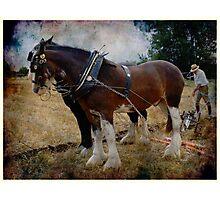 ploughman Photographic Print