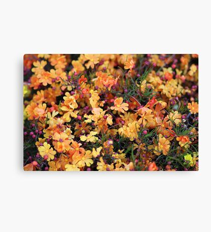 Orange Stars - Hibbertia stellaris Canvas Print