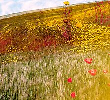 Field  of Poppies by Neophytos