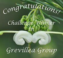 Grevillea Challenge Win Banner by MissyD