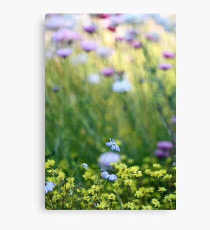 WA Wildflowers Canvas Print