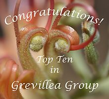 Grevillea Top Ten Banner by MissyD