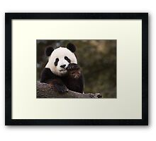 Mellowed Out Framed Print