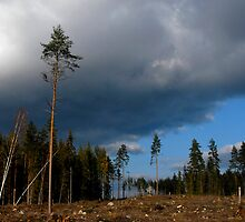 Stormy weather by Heather Thorsen