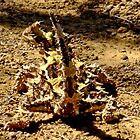 Thorny Mountain Devil by Karen Stackpole