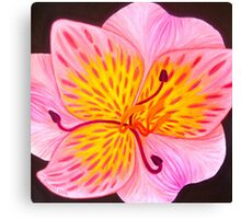 Lily art design, pink lily Canvas Print