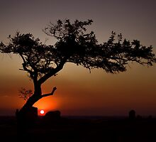 Dog Rocks Tree Sunset by ImagesbyDi