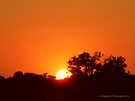 Orange Sunset - 1 of 2 by Barberelli
