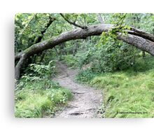 Explore Different Paths in Life Canvas Print