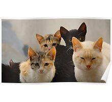 Kitten Company Poster