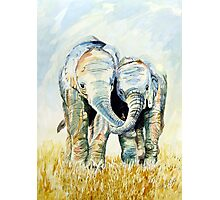 Calf Elephants Photographic Print