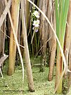 Orchids Hiding in Cattails by Barberelli