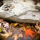 Bright Leaf by Amy Brookins