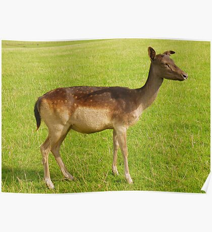 Sorry I Can't Afford You, You're a Little Deer..... Poster
