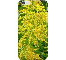 Allergy time - goldenrod iPhone Case/Skin