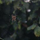 Web by David Devine