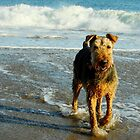 Belle of the Beach by cherylwelch