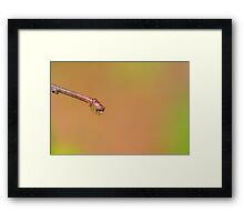 Water droplet on a twig Framed Print