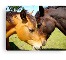 Equine Lovers Canvas Print