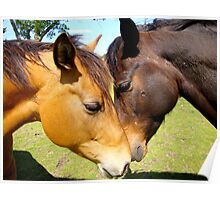 Equine Lovers Poster