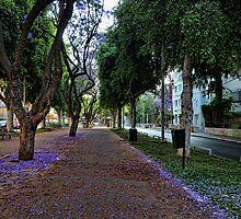 a purple spring foliage, Tel Aviv by Ronsho