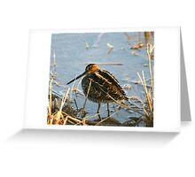Wilson's Snipe... Greeting Card