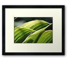 Hosta Waving Framed Print