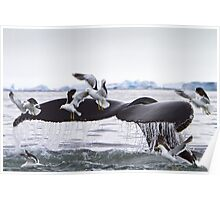 Humpback Whale going to the Birds! Poster