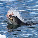 Leopard Seal Lunch! by Michael S Nolan