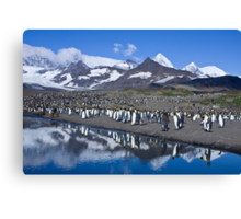 King Penguin reflections Canvas Print