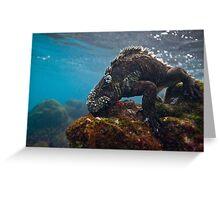 Marine Iguana breakfast Greeting Card