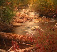 Brush Ck. vert by Steve  Taylor