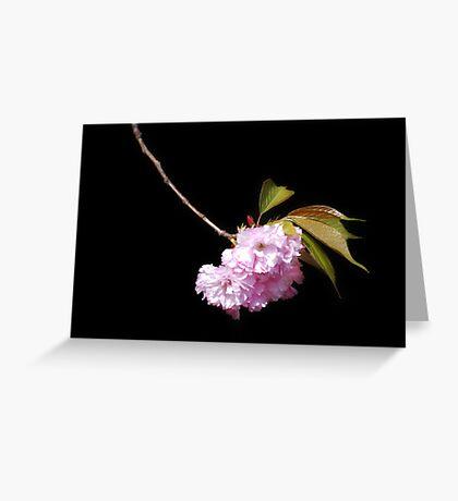 Japanese Cherry Bloom #2 Greeting Card