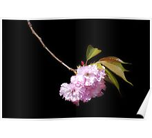 Japanese Cherry Bloom #2 Poster