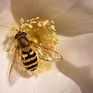 The September Hoverfly by sarnia2