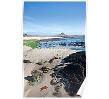 Sally Lightfoot Crab Landscape Poster