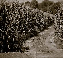Wandering Path by Amy Brookins