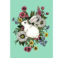 Rabbit in Flowers Photographic Print
