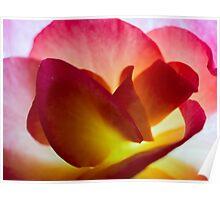 Begonia Petals   Macro Poster